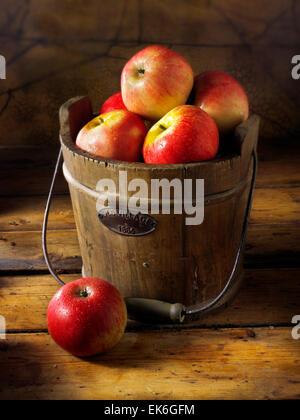 Fresh picked Discovery apples in a rustic wooden bucket - Stock Photo