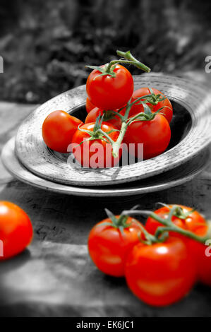 whole picked fresh red tomatoes on vines - Stock Photo
