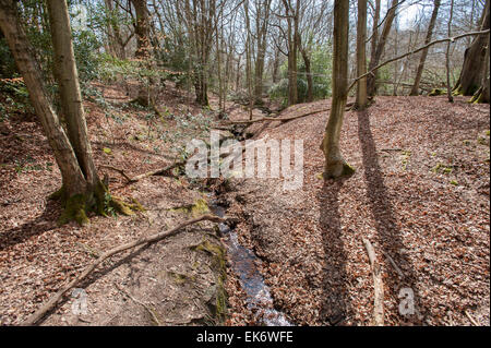 Small stream running through Ashdown Forest in East Sussex, England UK. - Stock Photo