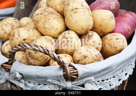 Fresh new potatoes - Stock Photo