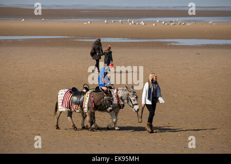 Blackpool, Lancashire: Donkey rides operating on the beach on a warm spring day - Stock Photo