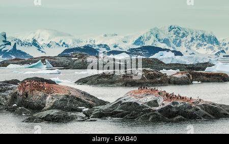 icebergs and Adelie penguin colony, Yalour Islands,  Antarctica - Stock Photo