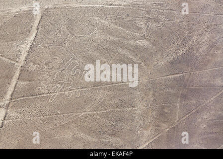 Nazca Lines octopus geoglyph in Peru - Stock Photo