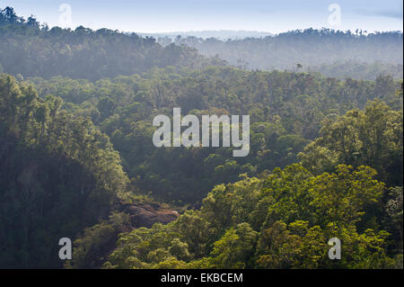 Rainforest in Tully Gorge National Park, part of the Wet Tropics World Heritage Area, UNESCO, Queensland, Australia - Stock Photo