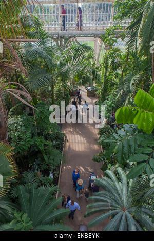The Palm House interior at Kew Gardens, UNESCO World Heritage Site, Kew, Greater London, England, United Kingdom, - Stock Photo