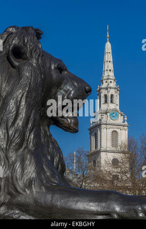 Lion at foot of Nelson's column and St. Martin-in-the-Fields church, Trafalgar Square, London, England, United Kingdom, - Stock Photo