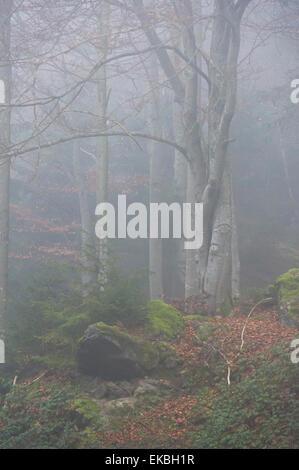 Bavarian Forest National Park, Bavaria, Germany, Europe - Stock Photo