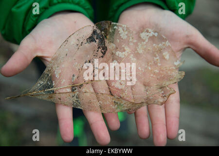 Transparent leaf on upturned palms - Stock Photo