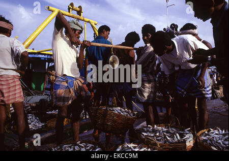 Fishmongers selling fresh fishes at the seacoast of Rameswaram in the state of Tamil Nadu South India - Stock Photo