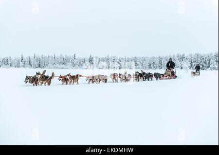 Husky sled tour. Kongass. Levi. Finland. Lapland. Scandinavia - Stock Photo