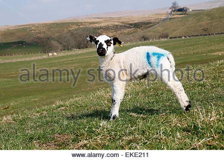 Middleton-in-Teesdale, Co Durham, UK. 9th April, 2015. UK Weather: A bright warm sunny Spring day in Upper Teesdale - Stock Photo