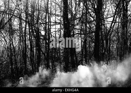 smoke in a spooky creepy forest Autumn trees silhouetted against sky - Stock Photo
