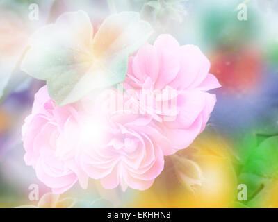 Double Exposure Geranium Flower With Bokeh Background