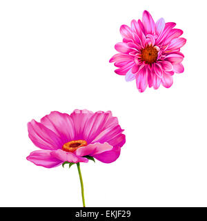 Mona Lisa flower. Isolated on white. chrysanthemum. pink poppy - Stock Photo