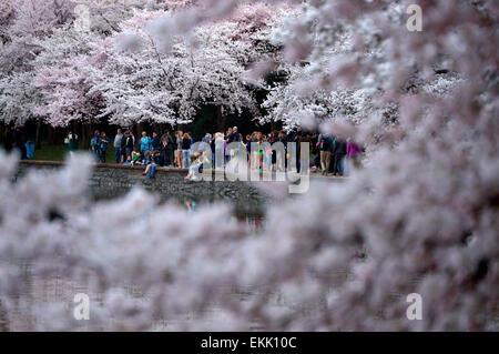 Washington, DC, USA. 10th Apr, 2015. People walk alongside the cherry trees around the Tidal Basin in Washington, - Stock Photo