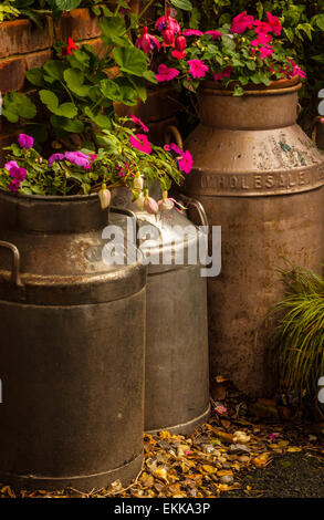 Old milk churns have been rescued and put to use as flower pots - Stock Photo
