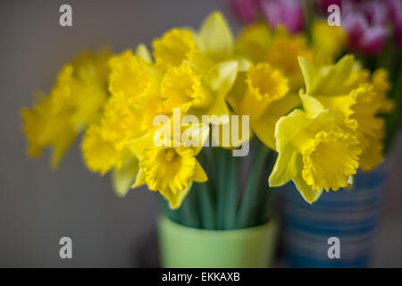Bunch of blooming daffodils in the green vase - Stock Photo