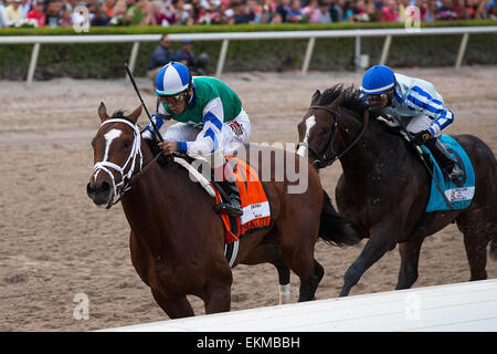 March 28, 2015 - Hallandale Beach, FL, U.S. - March 28, 2015: Materiality with John Velazquez up outduels Upstart - Stock Photo