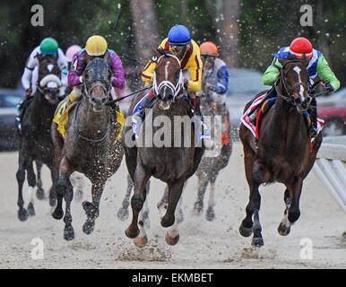 March 7, 2015 - U.S. - Carpe Diem with Johnny Velazquez Wins The Tampa Derby at Tampa Bay Downs March 7 2015 - Stock Photo