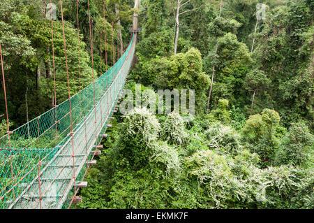 Canopy walk in the Danum Valley Conservation Area, Borneo, Malaysia - Stock Photo