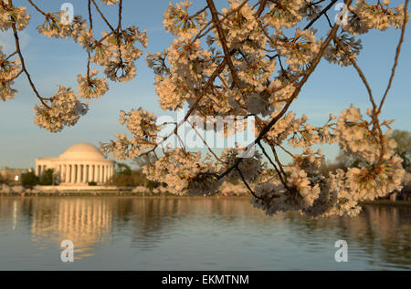 Washington, DC, USA. 12th Apr, 2015. Cherry blossoms are seen around the Tidal Basin in Washington, DC, capital - Stock Photo