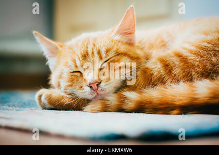 Peaceful Orange Tabby Male Kitten Curled Up Sleeping On Floor - Stock Photo