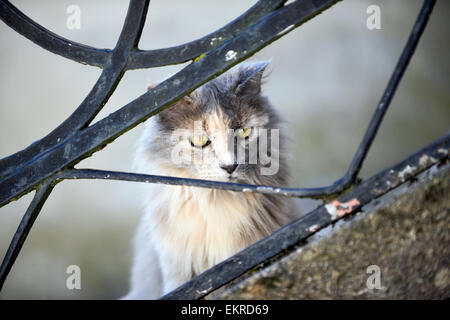 House cat behind a banister rail - Stock Photo