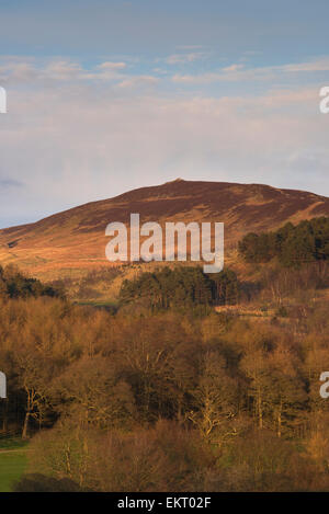 Sunny spring evening scenic view towards the steep wooded hillside, fells & summit of Beamsley Beacon under blue - Stock Photo
