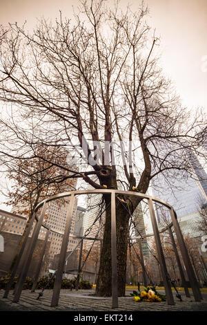 Survivor Tree, Manhattan, New York. - Stock Photo