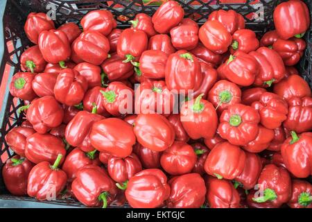 freshest and hottest chili red peppers - Stock Photo