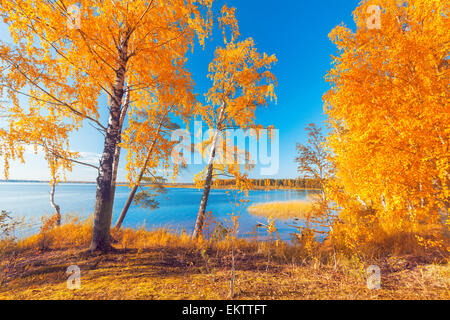 Autumnal Park. Autumn Trees and Leaves - Stock Photo