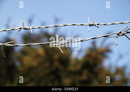 Close up of barbed wire with the blue autumn sky and trees as backdrop - Stock Photo