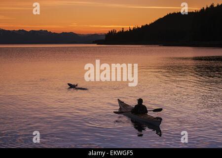 Sea kayaker watches leaping salmon at sunset, Juneau, Southeast Alaska - Stock Photo