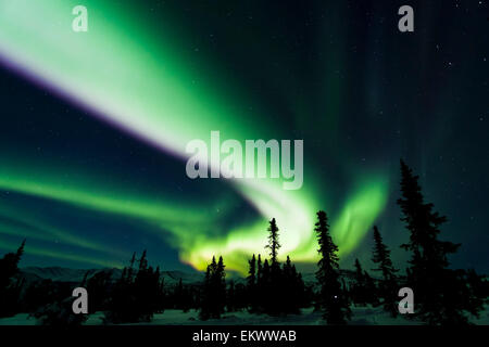 The bright neon green aurora swirling above the boreal forest, Chena River State Recreation Area, Fairbanks, Alaska, - Stock Photo