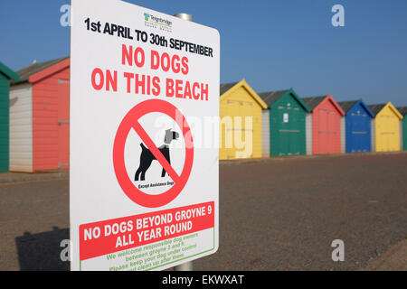 No Dogs Allowed on Beach sign against bright coloured beach huts at Dawlish Warren Devon England UK - Stock Photo