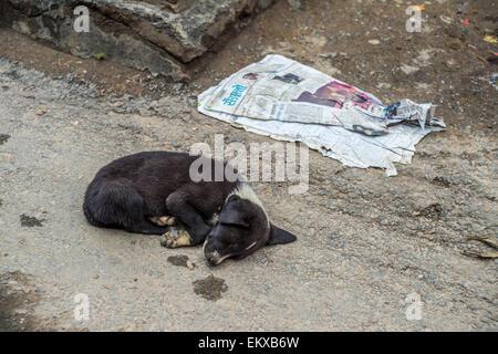A puppy is sleeping on the ground in Kathmandu, Nepal - Stock Photo