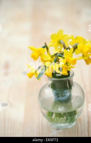 Narcissus. Cut Daffodil Tete a Tete flowers in a vase - Stock Photo