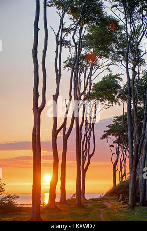 Sunrise at a beech forest at the Baltic Sea - Stock Photo