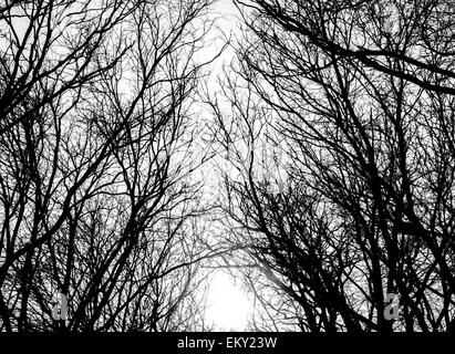 Closeup image of tree branches - Stock Photo