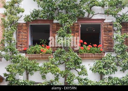Flower Box On Window Ledge; Hallstatt, Salzkammergut, Austria - Stock Photo