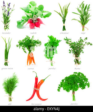 Fresh herbs and vegetable collection isolated on white backgroun - Stock Photo