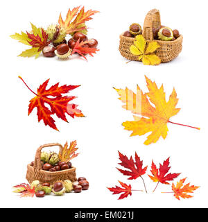 Collage from different autumn leaves and chestnuts - Stock Photo