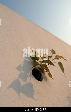 Flowers growing on a wall - Stock Photo