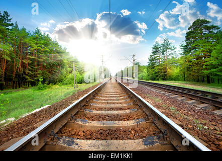 Railroad through the green pine forest close-up - Stock Photo