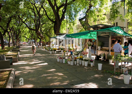 Pedestrian Street With Flower Stall; Mendoza Argentina - Stock Photo