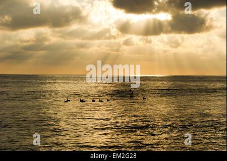 Cloud rays break through as ocean birds rest on the water - Stock Photo
