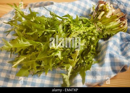 bunch of hand-picked wild dandelion greens - Stock Photo