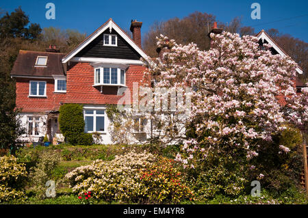 Country House with a magnolia Tree In Full Bloom In The Front garden - Stock Photo