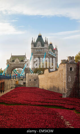 A sea of red poppies at the Tower of London, UK. - Stock Photo