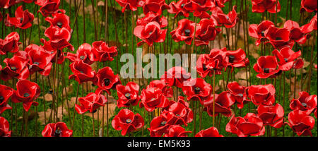 A close-up of the ceramic poppies at the Tower of London, UK. - Stock Photo